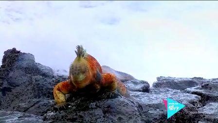 第十八期:神秘的进化岛屿 加拉帕戈斯
